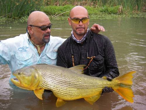 Record fly-caught golden dorado from Rio Juramento