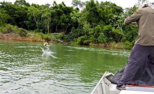 freshwater-dorado_8